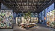 """""""Nous les arbres"""": une exposition sur l'""""intelligence"""" sensible des arbres"""
