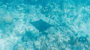 Le Belize, un spectacle sous-marin inoubliable.
