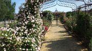 Les champs et les chemins de la rose à Douai-la-Fontaine