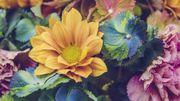 Quelle fleur êtes-vous ?