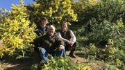 La famille Reynaud, mimosistes depuis 3 générations