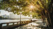 Comment les espaces verts peuvent améliorer la santé des citadins