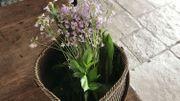 La récolte de plantes comestibles sauvages du matin