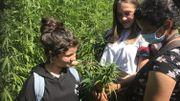 Idée d'été : Le labyrinthe dans le chanvre à Daussois