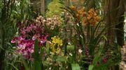 La jungle aux orchidées de l'Amazone à Nalinnes