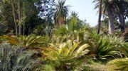 La Villa Thuret, le jardin botanique d'Antibes