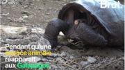 Pendant qu'une espèce animale réapparaît, une autre s'éteint à l'autre bout du monde