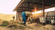 Visiter une ferme, rencontrer un producteur, découvrir le métier d'agriculteur…