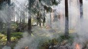 Incendies en forêt: les risques sont réels, le code rouge est de mise