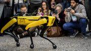 Coronavirus: un robot chien optimisé pour aider le personnel hospitalier
