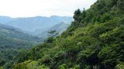 En Colombie, des scientifiques découvrent de nouvelles espèces en territoire inconnu