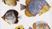 Des milliers d'illustrations botaniques et animales disponibles en un clic