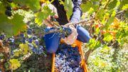 Citytrip en France: devenez vendangeur d'un jour pour tout comprendre sur le vin