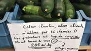 Surproduction de courgettes: les producteurs liégeois lancent un appel aux clients