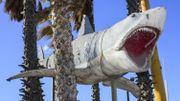 """Le requin des """"Dents de la mer"""" terrorisera les visiteurs du musée des Oscars"""