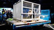 Pays-Bas: engouement pour deux pandas géants venus de Chine