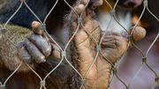 Les parcs et les zoos, une prison pour animaux?