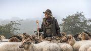 Dans le nord de l'Espagne, la toute première école de bergères du pays va bientôt voir le jour