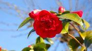 Saint-Valentin: et si on troquait les roses contre des fleurs de saison?