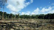 Les problèmes liés à l'huile de palme