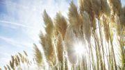 Les plantes invasives, nouveau casse-tête envionnemental