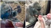Une maman présente son bébé à une femelle gorille et émeut la toile