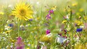 Le Belge redécouvre et embellit son propre jardin