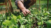 L'agroécologie, qu'est-ce que c'est ?