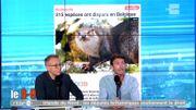 315 espèces ont disparu en Belgique !