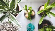 Soignez vos plantes d'intérieur en hiver!