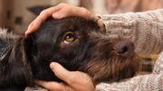 Votre chien identifié par votre numéro de registre national