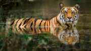 Un couple en Inde achète les terrains à côté d'une réserve de tigres pour permettre à la forêt de s'agrandir