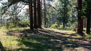 Pendant le jeûne, les patients sont encouragés à pratiquer la marche dans la forêt et au bord du lac. Ils sont suivis par le médecin chaque jour et reçoivent des traitements de balnéothérapie.