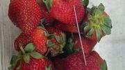 Mystère des fraises piégées: après l'Australie, une aiguille découverte dans un fruit en Nouvelle-Zélande