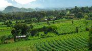 L'agroforesterie, une agriculture écologique et créatrice d'emplois