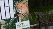 Lionne abattue à Plankendael: action de protestation samedi devant le zoo