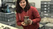 Amandine Pierlot, archéologue, tient un pichet presque intact datant du 14e siècle, sans doute fabriqué à Andenne. Que contenait-il ? Sans doute de l'eau, peut-être du vin.