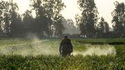Chlorpyriphos, l'insecticide sur la sellette: mode d'emploi