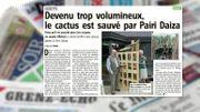 Pairi Daiza sauve... un cactus! C'est dans la Revue de presse