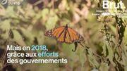 Lois contre le plastique, protection des papillons… Les 5 bonnes nouvelles pour la planète