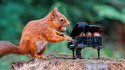 Un petit piano rempli de noisettes et un écureuil curieux, la recette d'une photographie pleine de charme