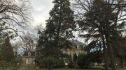 Le parc du château abrite une centaines d'arbres dont un séquoia