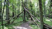 Des arbres morts, présents en nombre au sein de la forêt