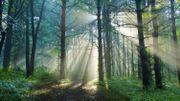 """Francis Hallé: """" Pour recréer une forêt primaire en Europe, il ne faut rien faire, juste laisser la nature travailler par elle-même """""""
