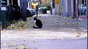 Un chat perdu retrouvé par un médium