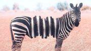 Avez-vous déjà vu les animaux surréalistes de l'artiste Ronald Ong?