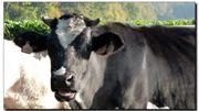 Les Journées Internationales de l'Elevage et de l'Agriculture de Tournai