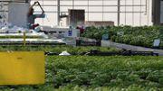 Belgodyssée : pour le troisième duo, une semaine de Toussaint aux couleurs de l'agriculture urbaine !