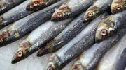"""Italie: le mouvement des """"sardines"""" s'attaque à Salvini et l'extrême droite"""