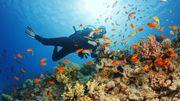 """Un tour du monde pour les """"globe plongeurs"""""""